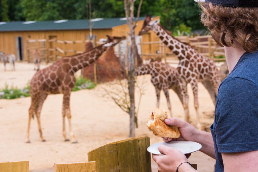 Experience 11 – Giraffe Breakfast