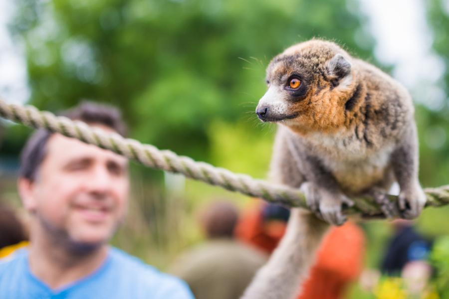 Experience 10 – Lemur Walkthrough